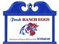 Trafficanda eggs